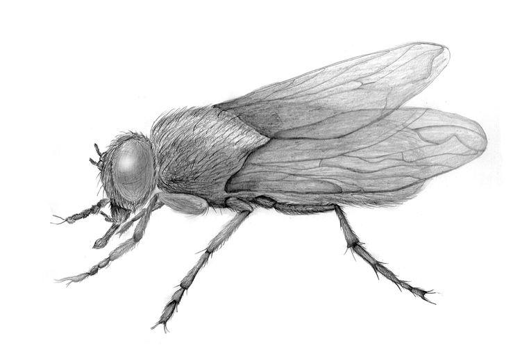 fly better animalia life
